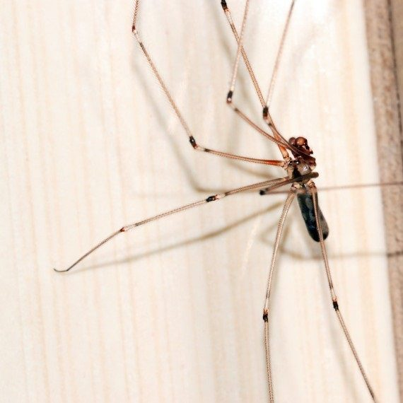 Spiders, Pest Control in Mill Hill, NW7. Call Now! 020 8166 9746